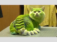 Katzen Frisuren, lustige Katzen YouTube