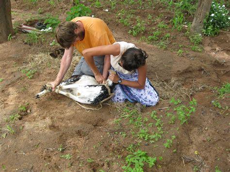 chinese woman killing  goat   hunter kills beautiful goat  scotland  scrutinizing