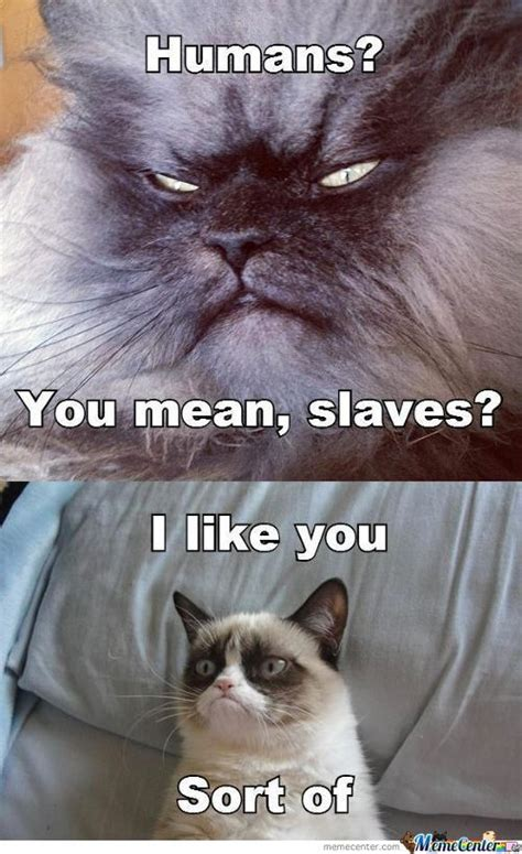 evil cat memes  collection  funny evil cat pictures