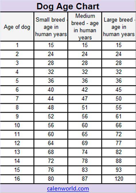 dog age calendar dog age chart dog age converter