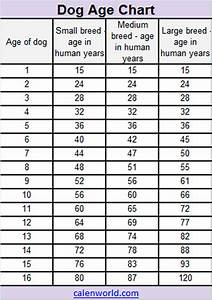 human dog years chart