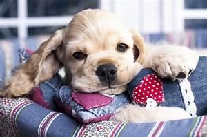 Nudeln Für Hunde : vorteile von honig f r hunde heilend und beruhigend ~ Watch28wear.com Haus und Dekorationen