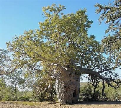 Trees Baob Prison Prisons