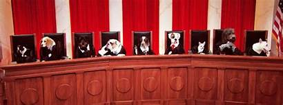 Court Supreme Last Dog Week Days Tonight