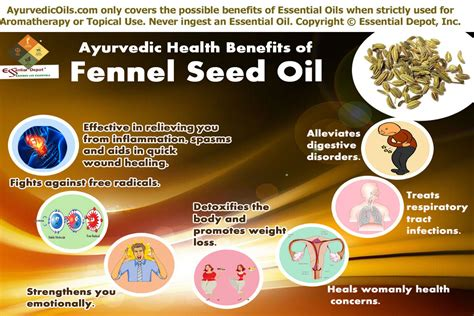 Health Benefits Of Fennel Seed Oil Essential Oil