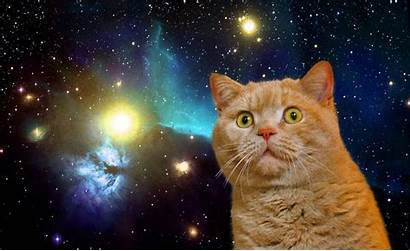 Space Kitty Cats Cat Background Wallpapersafari Disappointed