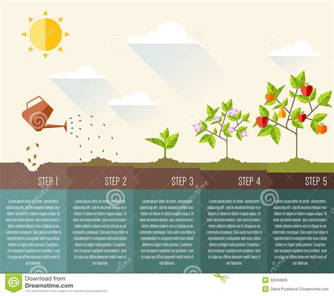 How To Design A Flower Garden Step By Step steps of plant growth timeline infographic design stock