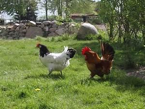 Hühner Im Garten : ferienwohnung dat l ttge hus l neburger heide firma ferienunterk nfte familie ~ Markanthonyermac.com Haus und Dekorationen