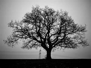 Baum Mit Weißen Blüten : pin schwarz wei acrylbilder baum mit wei en bl ten ~ Michelbontemps.com Haus und Dekorationen