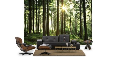 chambre med tree wallpaper forest wall murals photowall co uk
