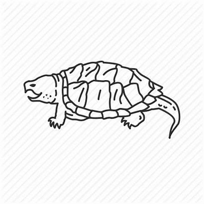 Turtle Snapping Icon Reptile Reptiles Essentials Editor