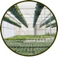 wholesale non profit geerlings garden center