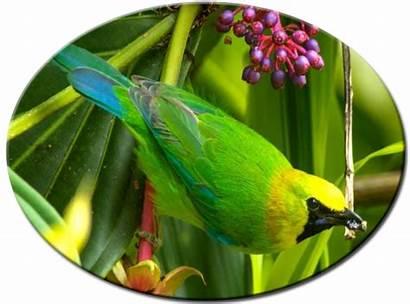 Rante Cucak Mengapa Burung