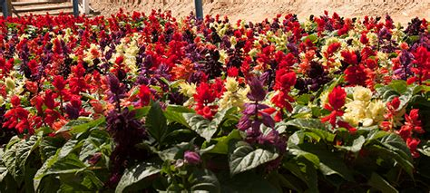 dm color express salvia vista mixdm color express