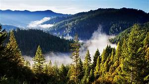Forest, Mountains, Landscape, Mist, Clouds, Wallpapers, Hd