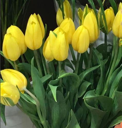 piantare tulipani in vaso come coltivare tulipani guida per principianti