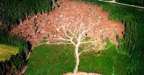 joakim berglunds hurricane tree captures natures beauty