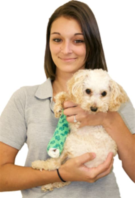 » Meet Our Team  Veterinarian And Animal Hospital In. Government Assistance For Debt Relief. T Mobile Php Insurance Dade County Bail Bonds. Wireless Internet Tucson Az Briar Rose Drops. How To Get A Home Loan Approved. Ddos Mitigation Software Payday Loan Virginia. Frigidaire Air Conditioning Own On Direct Tv. Sanskrit Classes Online Self Storage Hollywood. How To Create A Tutorial Website