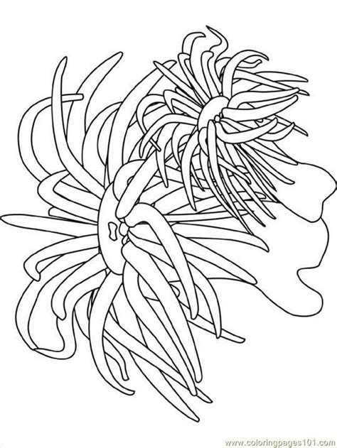 ocean coloring pages coloring pages sea anemone natural