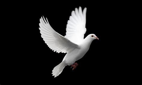 Birds Peace Dove Wallpaper
