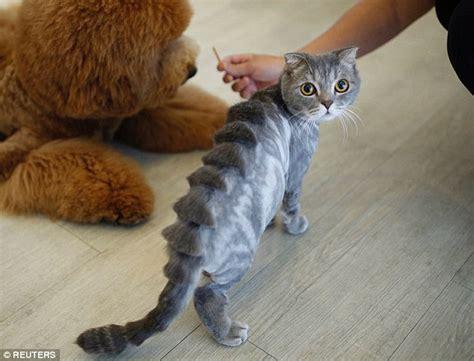 groomers fashion pets  teddy bears lions