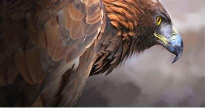 Eagle 4k Ultra Bird Golden Wallpapers Eagles