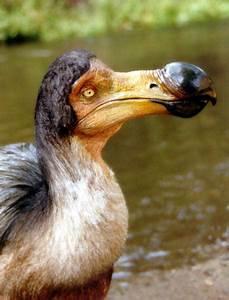 Enormous Beak Natural World Of Living Things