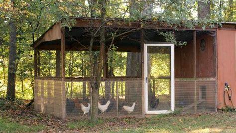 chicken run requirements hgtv