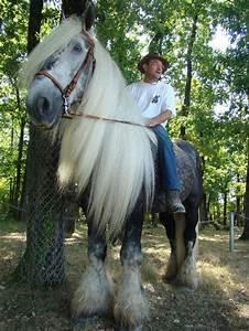 1096 Best Draft Horses Images On Pinterest