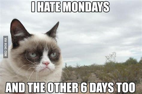 Grumpy Cat Monday Meme - quotes by grumpy cat like success