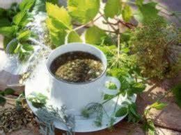 Backyard Patch Herbal Blog: Bergamot / Bee Balm - Herb of ...