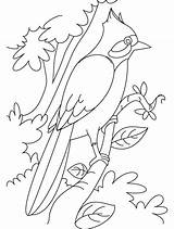 Nightingale Coloring Hummingbird Branch Sheets Drawing Clipart Perched Clip Pages Printable Library Print Popular Getcolorings sketch template