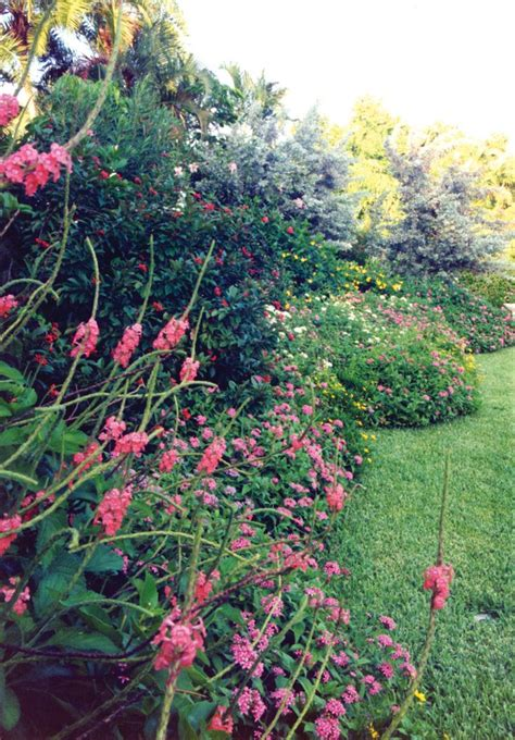 1000 images about south florida landscaping on