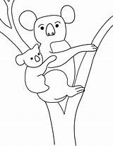 Koala Coloring Pages Print Colouring Printable Animal Penguin Template Emperor Cliparts Templates Bear Baby Kolala Animals Coloringbay Comments sketch template