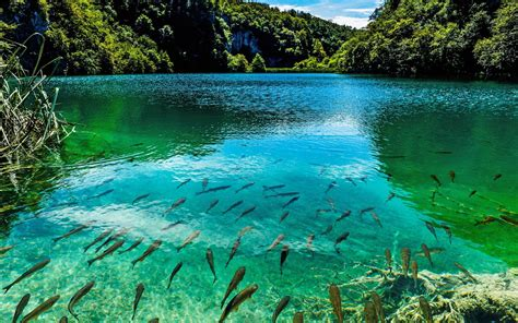 Beautiful Photo by Beautiful Turquoise Lake In Plitvice National Park