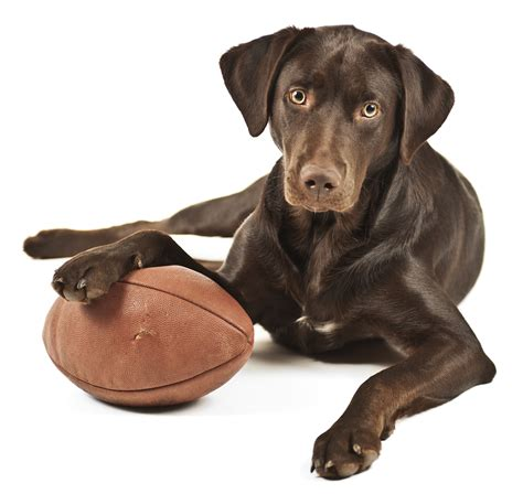 AFL Grand Final Fun With Your Pets! - Jetpets Pet Travel