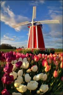 Netherlands Holland Windmill Tulips