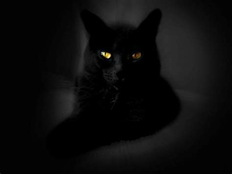 Background Black Cat by Wallpapers Black Cat Wallpaper Cave