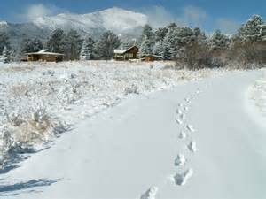 Bobcat Prints Tracks in Snow