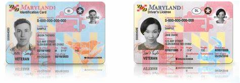A maryland identification card is an official document with your picture, name, where you live and your age on it. Maryland Puts Security First with New Driver's Licenses | StateTech Magazine