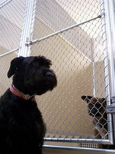 Kennel wikipedia for Puppy dog kennels