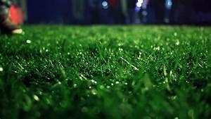 Green grass. Closeup. Lawn close up. Grass background ...
