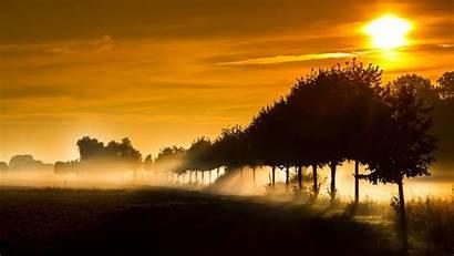 Sun Rays Sunlight Nature Wallpapers Trees Desktop