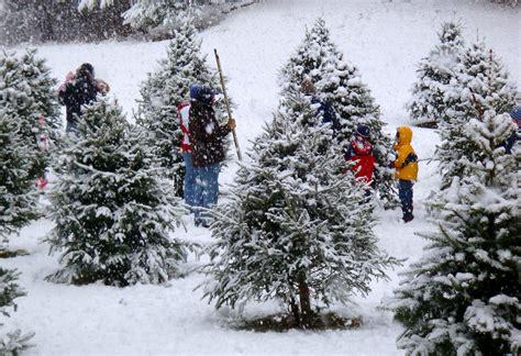 day  christmas tree farm weekend  bog hollow