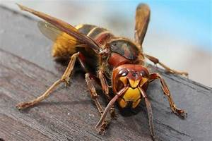 10 Most Terrifying Insects In The World