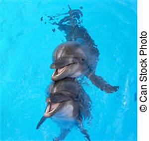 Schöne Delfin Bilder : delphine stock foto bilder delphine lizenzfreie bilder und fotografien von tausenden ~ Frokenaadalensverden.com Haus und Dekorationen