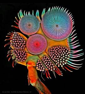 The extraordinary details of tiny creatures captured with for Insect microscopy igor siwanowicz