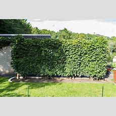 Sichtschutz  Ideen Für Den Garten