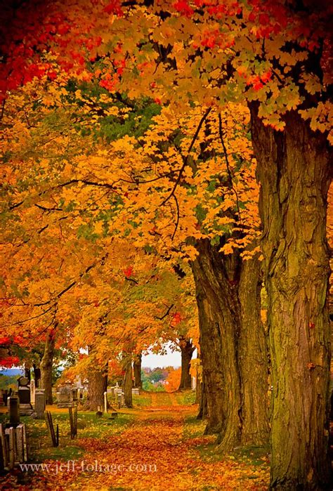 trees with fall foliage new england foliage autumn loveliness pinterest new england new hshire and england