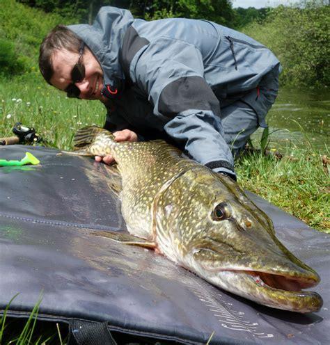 comment cuisiner le brochet comment pêcher le brochet au leurre souple type big bait